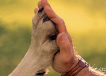 Коррекция поведения собак.