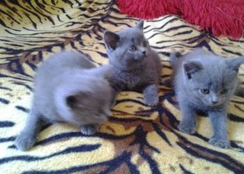 плюшевые красивые котята
