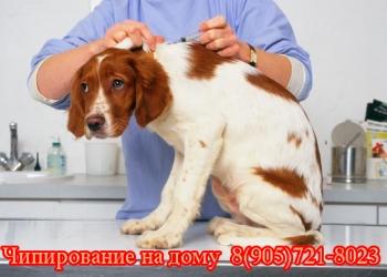 Чипирование животных на  дому. Москва и область