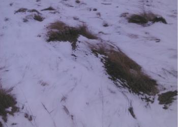 земельный участок в Заречье с. Куксово