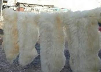 Оптовая продажа натуральных выделанных декоративных овечьих шкур