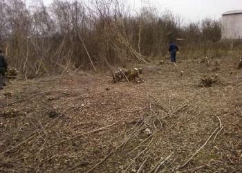 Выполним оперативно работы по удалению ненужных деревьев и кустарников