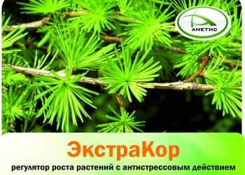 «ЭкстраКор» – регулятор роста растений с антистрессовым действием