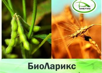 «БиоЛарикс» – стимулятор роста растений