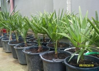 Пальмы и Агавы