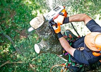 Профессиональное удаление аварийных деревьев любой сложности
