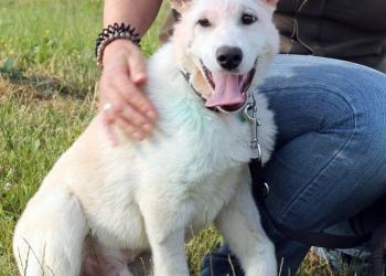 Смешной, белый и милый щенок с чудным носом