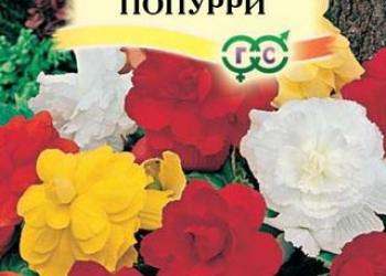 Бегония клубневая F1 Попурри (семена)