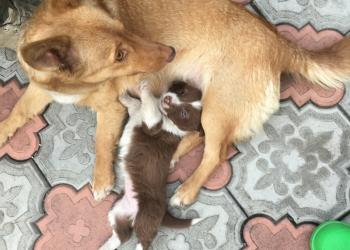 Подарим щенка небольшой собачки