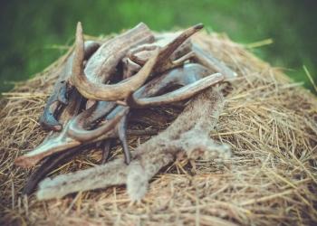 Натуральные лакомства и оленьи рога для собак