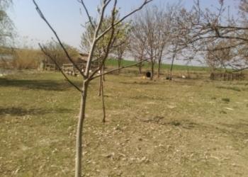 Дом, ферма, фруктовый сад и 5 Га земли.
