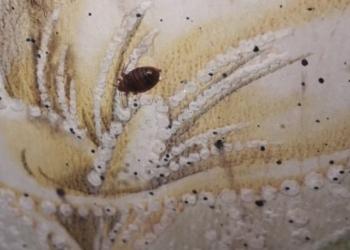 Уничтожение ВСЕХ видов насекомых и грызунов