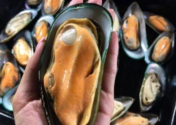 Морепродукты,Мидии,Осьминоги