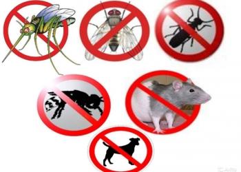 муравьи клопы блохи крысы тараканы и другое