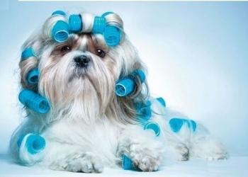 Мастер груминга (стрижка собак и кошек) на дому