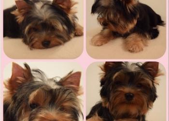 Милые красивые щенки