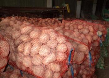 Картофель оптом от производителя!!!
