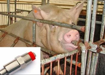 Нипельные поилки для свиней