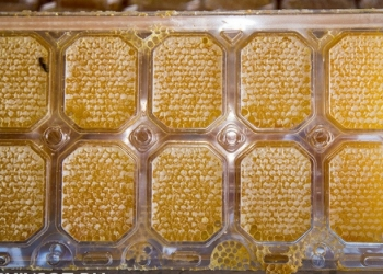 Мёд 2017г в Тамбове разнотравье