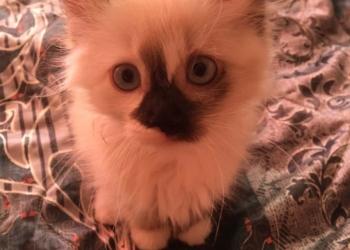 Котёнок с необычными способностями