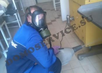 Профессиональное уничтожение тараканов в Ялте, Алуште, Алупке