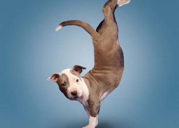 Дрессировка  Передержка собак