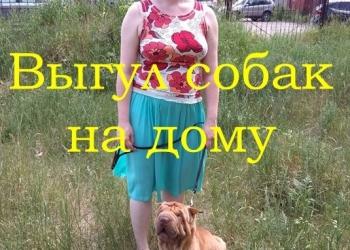Выгул собак на дому