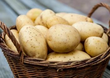 Предлагаем картофель оптом. Сорта: Розара, Ред Скарлет, Ромона, Гала, Невский.