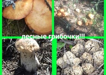 Продаю маринованные грибы!!