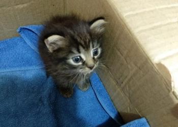 Ищем котенку надежных хозяев. Срочно!!!