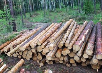 Куплю лес кругляк с места в Бурятии