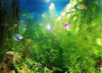 Новый природный аквариум