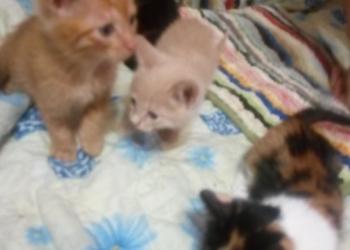 Котики ищут дом