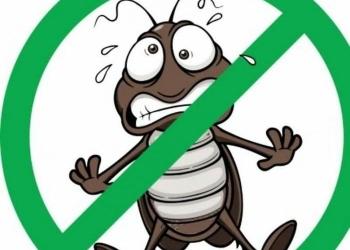 Дезинсекция(уничтожение насекомых)