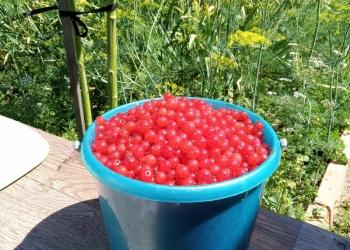 Варенье ягоды :клубника садовая, вишня, чёрная смородина, малина