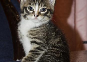 Три Котенка ищут Хозяев