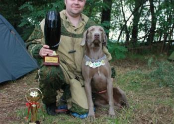 Щенки Веймаранера от рабочих собак Европейских линий.