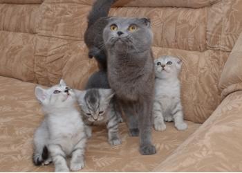 СРОЧНО!!! в связи с переездом, продам милых котяток