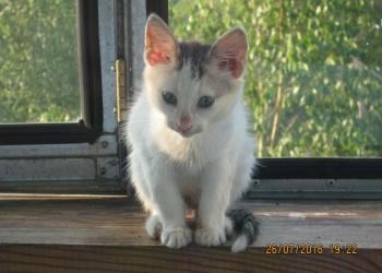 Ищем дом для котенка