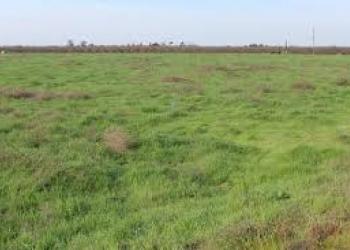 Продам 164 сотки земли сельскохозяйственного назначения. Земля находится недалек