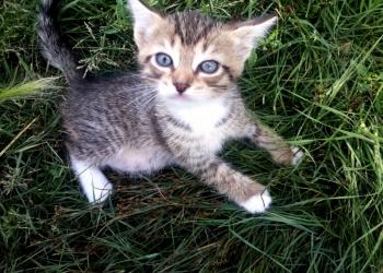 Отдам в хорошие руки котенка!!!