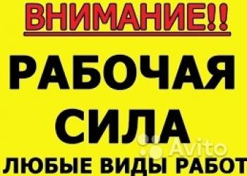 Надежные грузчики/разнорабочие