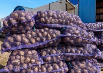 Картофель оптом от 1 тонны