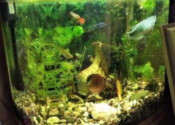 Продам аквариум с рыбками и всем необходимым