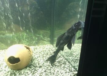 Продаются рыбки, дизайн аквариума!!!