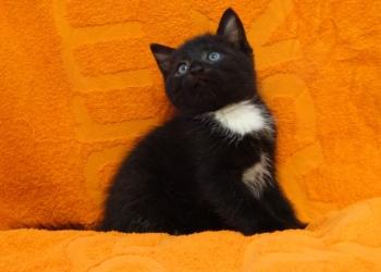 Очень деятельный и смешной маленький котенок