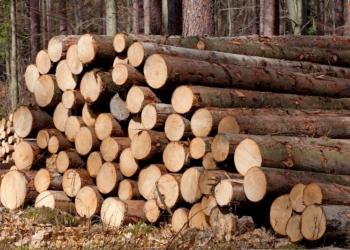 Продажа круглого леса