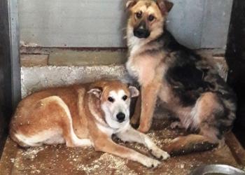 Собаки и щенки - охранники и друзья в добрые руки