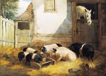 Свиной комбикорм  КК 58
