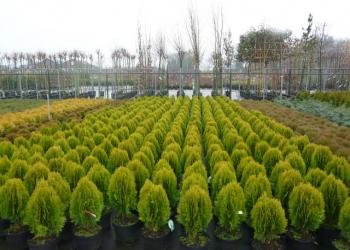 Растения для сада, семена для газона, рулонный газон, мульча кора хвойных пород.